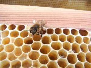 滝下養蜂園