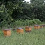 荒井養蜂場