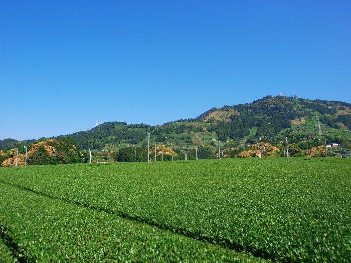 1507_tea-higashiyama002
